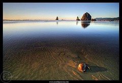 a Crab's Life near its Sunset (Arnold Pouteau's) Tags: ocean sunset sea oregon coast pacific crab cannonbeach shores soe naturesfinest golddragon abigfave impressedbeauty top20sea top20seascape betterthangood