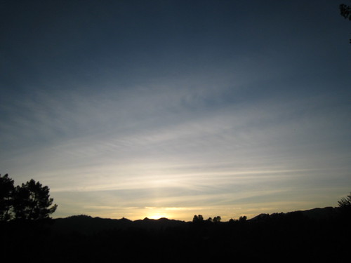 Pictures from Anna Lisa's garden in Orinda - Sunset