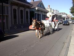 Horsey! (Francis Jayve) Tags: louisiana neworleans 2008 sugarbowl