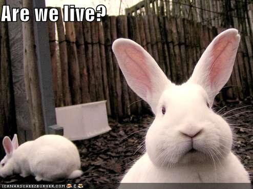Bunny-cam