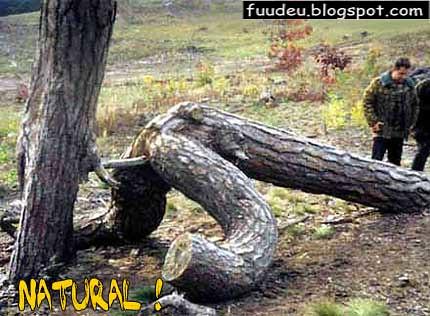 Sexo natural