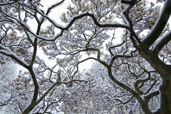 Tree snow in Preston Park Brighton (grahambrown1965) Tags: park trees snow tree sussex brighton branch pentax branches getty preston eastsussex soe prestonpark istds gettyimages pentaxistds naturesfinest 1645mm diamondclassphotographer flickrdiamond thatsbostin justpentax smcpda1645mmf40 gettyimagesandtheflickrcollection