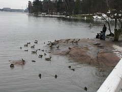 Helsinki 21 (Andrejček) Tags: animals finland helsinki mallard animalplanet canadagoose brantacanadensis anasplatyrhynchos