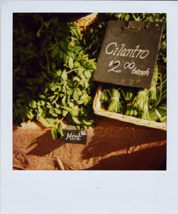 may17: cilantro