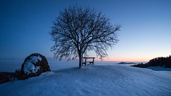 before the sun rises (schneider-lein) Tags: sky snow tree landscape nature naur fog nebel foggy moonlight mondlicht sunrise sonnenaufgang beforethesunrises carlzeiss zeissloxia2128 loxia sonyilce7rm2 alpha7rm2 a7rii mf manual manualfocus manuell manuellerfokus allenwinden switzerland suiss schweiz svizzera earlymorning frühermorgen morgenlicht morninglight