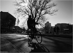 Back Light Bicycle (Hindrik S) Tags: backlight bike bicycle fyts fiets rad boy cycle road tree street straat strjitte streetphotography straatfotografie shadow shade skaad schaduw schatten wheel tsjil wiel liwwadden leeuwarden ljouwert westersingel ruiterkwartier harmonie kh2018 2017 sonyphotographing sony sonyalpha a57 α57 slta57 tamron tamronspaf1750mmf28xrdiiildasphericalif tamron1750 1750 30mm blackandwhite zwartwit swartwyt f4 12500 iso100