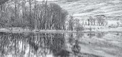 Frosty Shore (cotswoldman) Tags: loch lochsandglens highlands highlandsandislands scotland scottishhighlands scottish landscape blackandwhite blancoynegro blancetnoir noiretblanc monochrome mono gloucestercameraclub aberfeldy dukespass frost frozen winter aberfoyle lochachray