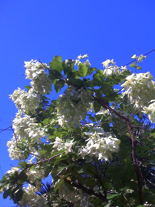 Blue, blue sky
