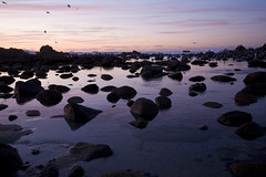 Gulls Swarming Pt. Pinos, Pacific Grove (HLRobinWard) Tags: ocean california sunset sea landscape marine gulls montereybay northamerica pacificgrove habitat seabirds californiacentralcoast ptpinos shorebirds rockyoutcrops photocontesttnc09