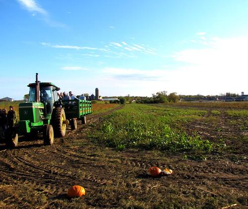 pumpkins 13