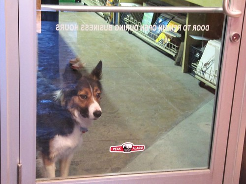 record shop dog