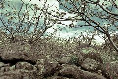 Suspiros de Primavera (Angie Ravelo Photography) Tags: flowers nikon pastel vintagestyle tictactoe softtones angiephotography