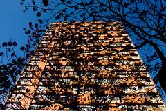 =D (Line Photo Art) Tags: brazil animal brasil photoshop canon cores focus saopaulo sopaulo natureza paisagem escola fotografia fotgrafa edio tratamento lineartphoto 450d canonxsi linecastro linephotoart
