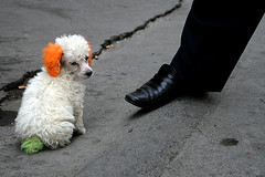 Colourful dog (Pawel Boguslawski) Tags: china dog canon foot shoe asia urumqi 400d