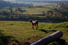 DSC_5070m (rudi79) Tags: dog kutya veszprm