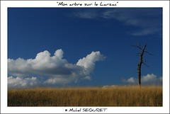 """Mon"" arbre sur le Larzac (Michel Seguret) Tags: fab color verde green nature colors landscape fun nikon colorful couleurs postcard vert ciel sensational grn fabulous michel iq nuage paysage atm colori naturesbest millau larzac causse smrgsbord aveyron cartepostale midipyrenees occitanie fiatlux seguret objektif rouergue nikond200 thinkgreen kartpostal amazingcapture diamondheart aplusphoto crystalaward francelandscapes ysplix diamondstars thisphotorocks breathtakinglybeautiful internationalgeographic thebestofday gnneniyisi arealgem worldtrekker thebestoftheday checkoutmynewpics spiritofphotography cielnuage gnnenlyisi colourvisions rubyphotographer flickrlovers photographersgonewild flickrverte naturallymagnificent momentdimagination flickrpopularphotographer croquenature panoramafotogrfico panoramafotografico excelenceofphotographer artofimages excelenceofphotographeraward diamondphotographersclub michelseguret"