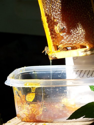 Honey from our bees