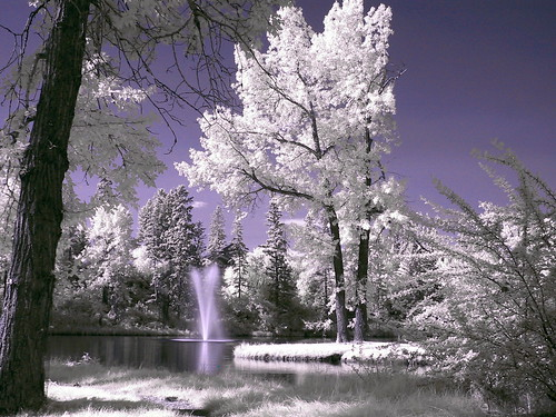Infrared Photo -- Bowness Park