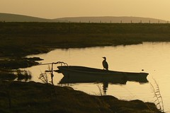 November Cormorant Silhouette (orquil) Tags: uk november autumn silhouette scotland orkney cormorant reflexions holm questfortherest fz7 orcades naturewatcher naturessilhouettes lochofayre llovemypic