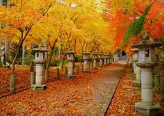 (nobuflickr) Tags: nature japan autumncolors naturesfinest fpc blueribbonwinner supershot superbmasterpiece theperfectphotographer kouzanjitemple hyogopref