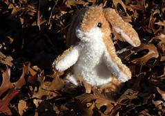 Knitting Bunny!!!