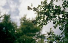 yellowberry (fractalgeometry) Tags: colour nature nikonfa portra160nc