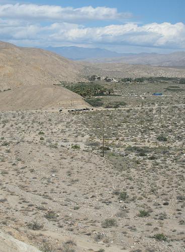 Mission Creek fault as a vegetation lineament, Thousand Palms Oasis