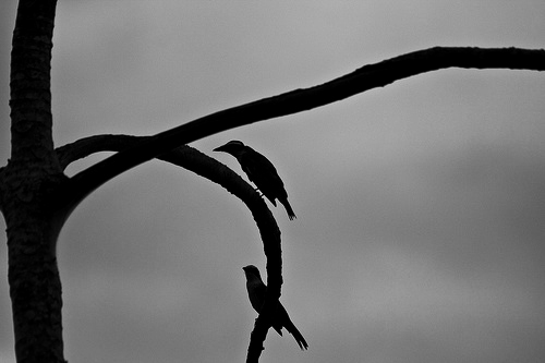 Silhouette of 2 Birds in a Tree