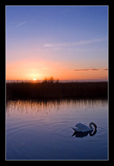 Peaceful sunset (Roger.C) Tags: sunset lake reflection bird water canon swan dusk newport wetlands ripples 1855mm gwent 30d supershot aplusphoto superbmasterpiece theperfectphotographer