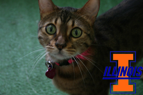 Kitty Cats of the Big Ten
