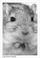 Bill (Craig Richardson) Tags: animals gerbil farm palace parkcrystal ccrystal palacelondond8018200mmcrystal