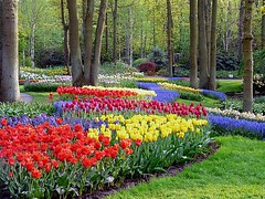 Keukenhof gardens (Coanri/Rita) Tags: park flowers trees holland europe thenetherlands keukenhof bulbflowers lisse landscapegarden knownworldwide bulbflowergarden