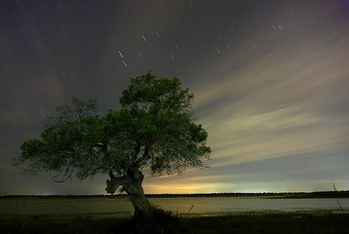 Noche by nexus6.