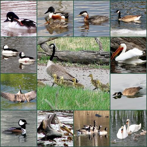 Quackers #2