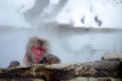 地獄谷野猿公苑 (Y.Okazakด้้้้้็็็็็้้้) Tags: 地獄谷野猿公苑 spa monky flickraward5 nature watcher naturewatcher pentaxflickraward