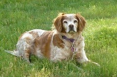 Miles 1996 - 2011 (darthmiles) Tags: dog very good miles a 19962011
