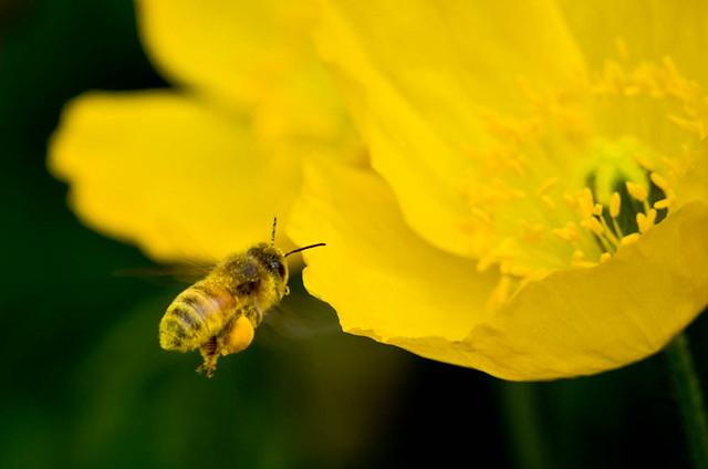 Bee_5777.jpg