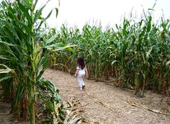 Julia in the corn maze.