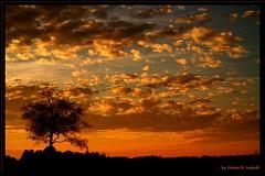 Tonight (Kirsten M Lentoft) Tags: sunset sky tree silhouette clouds bravo searchthebest bec soe themoulinrouge greatphotographers supershot magicdonkey mywinners abigfave anawesomeshot momse2600 infinestyle diamondclassphotographer amazingamateur theunforgettablepictures platinumheartaward wonderfulworldmix thegardenofzen thegoldendreams multimegashot kirstenmlentoft