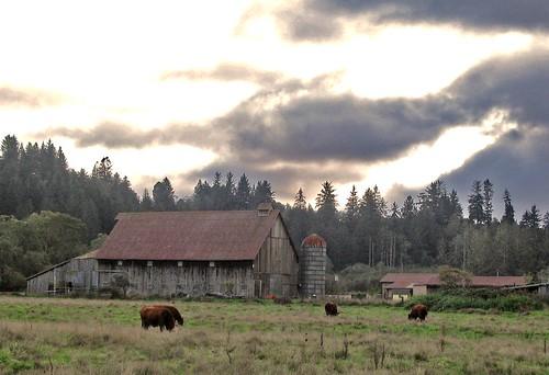 old barn.10.24.07