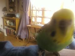 Inquisitive Bird