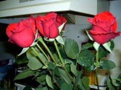 Anniversary roses :)