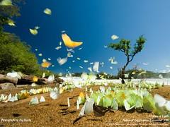 butterflies in Juruena Brazil