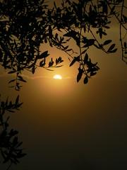 timidamente appare... (Aspirin Photo) Tags: fog photo flickr lucca montecarlo toscana sole nebbia ulivi aspirin mywinners anawesomeshot aplusphoto aspirinphoto pisasocialevent
