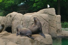 CIMG5180-Bronx Zoo (Belmont, New York, United States) Photo