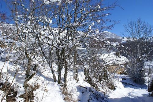 Le Ser sous la neige