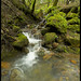 Cascading Creek, Armstrong Redwoods