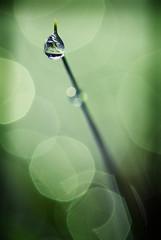 (mselderhuis) Tags: green dark rebel drop falling druppel eow xti 400d