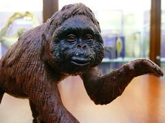 Orangutan Model (Little Boffin (PeterEdin)) Tags: museum lumix model education edinburgh university naturalhistory research labs orangutan teaching sully edinburghuniversity biology naturalhistorymuseum universityofedinburgh plasticmodel ashworth panasoniclumix kingsbuildings dmctz3 tz3 panasonictz3 panasonicdmctz3 ashworthlabs