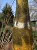 Gefaess (6) (wunderwesen) Tags: wool nature vessel felt surface structure gefäss
